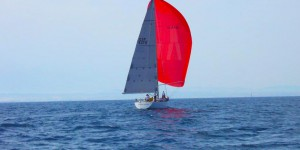 regata ophiusa