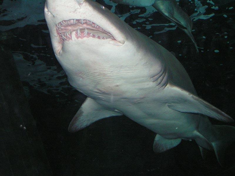 Los tiburones atacan internet