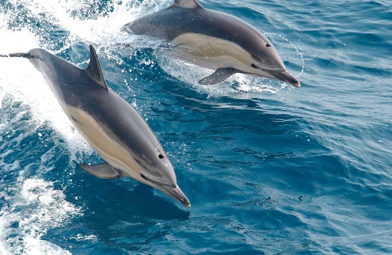Avistamiento de cetáceos en Denia