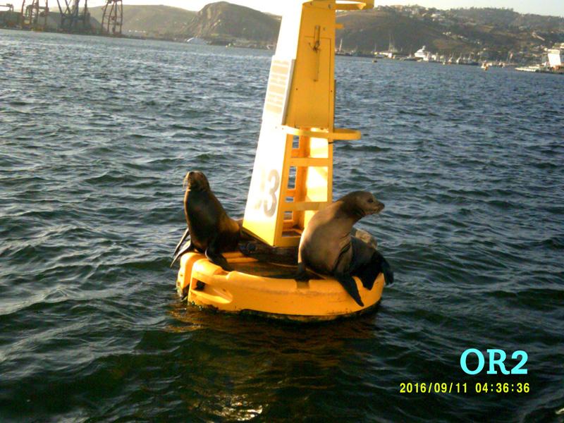 Un paseo en barco relato marinero