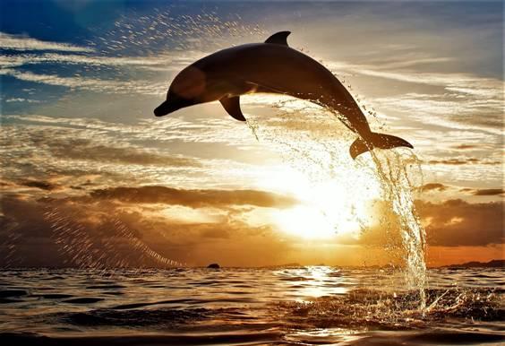 Delfín saltando atardecer